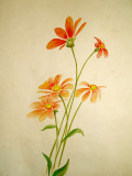 JRW - Odd Colored Rough Sunflower Study