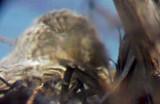 Great Horned -nest Ensley 3-2-08.