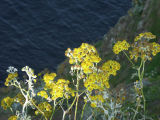 Flowers Over Cliff
