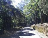 Road to Ooty
