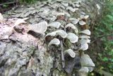 looks like sea shells
