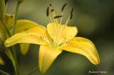 Fleur pict3011.jpg