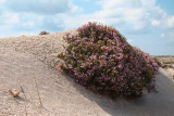 Diakofti beach dune