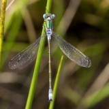 Libele / dragonfly ?