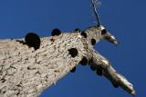 Dierenboom / animaltree200510200019