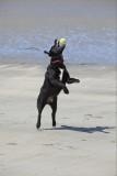Doglife 11.jpg