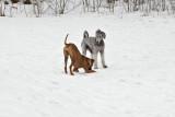 Doglife 5.jpg
