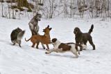 Doglife 6.jpg