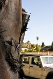 Hollywood 045.jpg