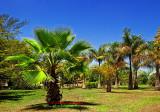DSC_4630- Palms