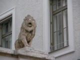 see what I mean about the lions