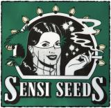 Under Me Sensi