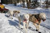 Iditarod37_Anc_07Mar2009_ 073.JPG