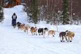 Iditarod37_Willow_08Mar2009_ 046_RayRedingtonJr.JPG