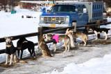 Iditarod_ANC_DogReturn_12Mar2009_ 004.JPG