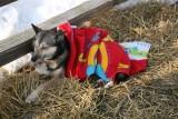 Iditarod_ANC_DogReturn_12Mar2009_ 011.JPG
