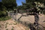 Vines engulfing fence surround pool area