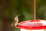 Humming Birds-3.jpg