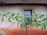 Mabuda Farm 02.jpg