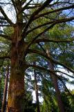 Arboretum - Portland 2006