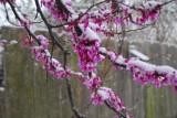 March 12, 2009 - Okarche Snowfall (2.8 inches)