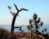 Torrey Pines scene