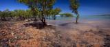 Mangroves at Town Beach