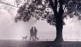 Stephens Green in Fog