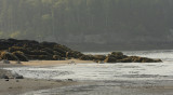 New River Beach S10 #6237