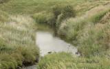 Tantramar Marsh S10 #6489