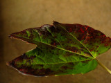 A Visual Ode to the Autumn Leaf