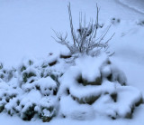 Swathed in an early morning snow-blanket