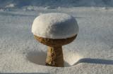Snowfall in the birdbath