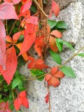 Rusty autumnal red in the small garden