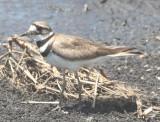 April 2009 Birds