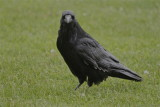 1664 Raven