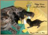 Amante's G-pentue  synt. 9.4.2006  -  Litter G  -  born April 9, 2006