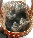 basket5weeks2.jpg