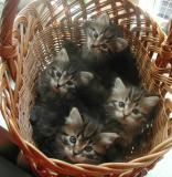 basket5weeks3.jpg