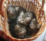 basket5weeks6.jpg
