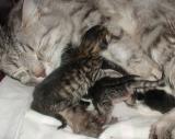 Mamma ja vastasyntyneet 24.05.