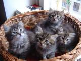 G kittens 6 weeks