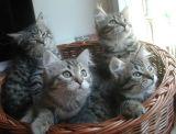 kittens12w13.jpg
