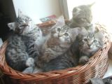 kittens12w3.jpg