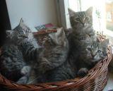 kittens12w4.jpg