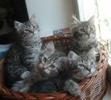 kittens12w6.jpg