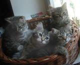 kittens12w7.jpg