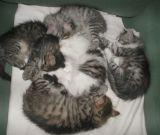 All kittens napping