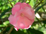 Another garden gem