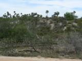 Cuban habitat